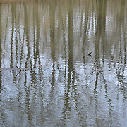 The water was high and the trees and sky cast a great reflection along the D and R Canal in Hillsborough, NJ