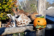 Halloween at ZSL London Zoo