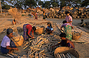 Bonded laborers cut bamboo for government projects, Mandalay. © Jeremy Horner