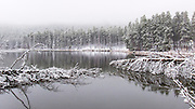 Fallen Trees, Sprague Lake, Rocky Mountain National Park