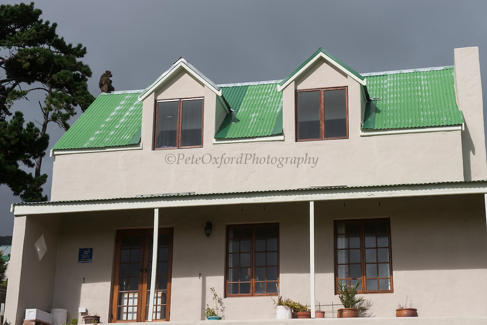 Chacma baboon (Papio ursinus) on house roof<br /> Noordhoek<br /> Western Cape<br /> SOUTH AFRICA