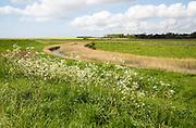 Marshland below sea level Butley Marshes, Suffolk, England, UK