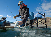 """Mike Braghini releases a cutthroat trout he caught through a hole in the frozen surface of Slide Lake on Saturday. Several ice fishermen took to the lake with various levels of success. """"I haven't killed a fish since 1993 and it's on my wall,"""" Braghini said."""