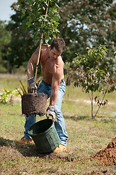 Man without a shirt planting a tree in a yard