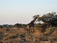 Amboseli - Esiteti Kenya