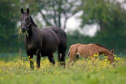 Fokkerij Van Eeckhout Isabelle<br /> Stal d'Ive - Outer-Ninove 2007<br /> Photo © Dirk Caremans