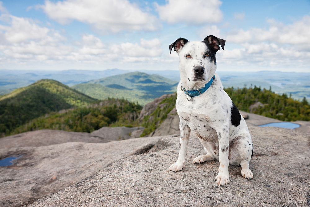 dog sitting on mountain summit looking at the camera