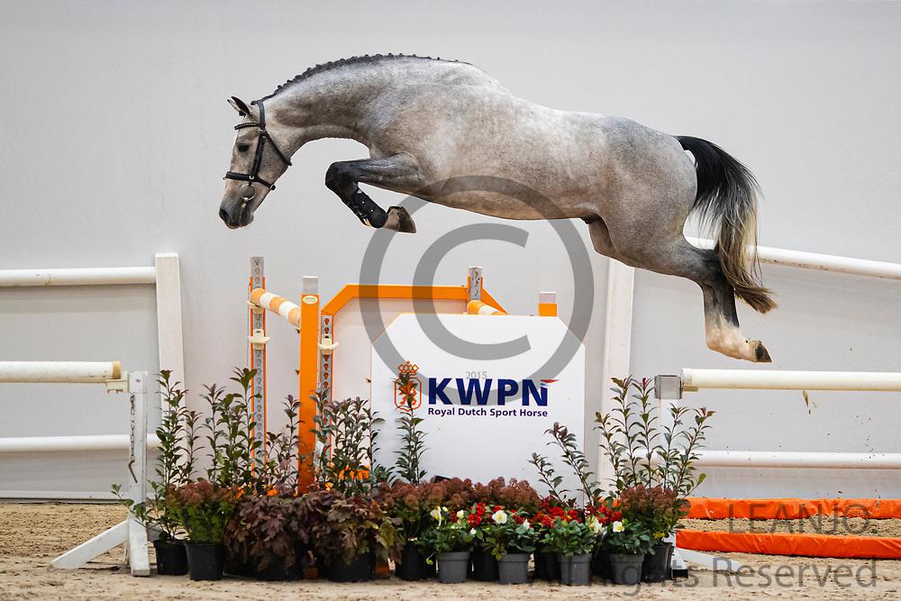 Nacho TCS<br /> KWPN Select Sale 2020 <br /> © DigiShots