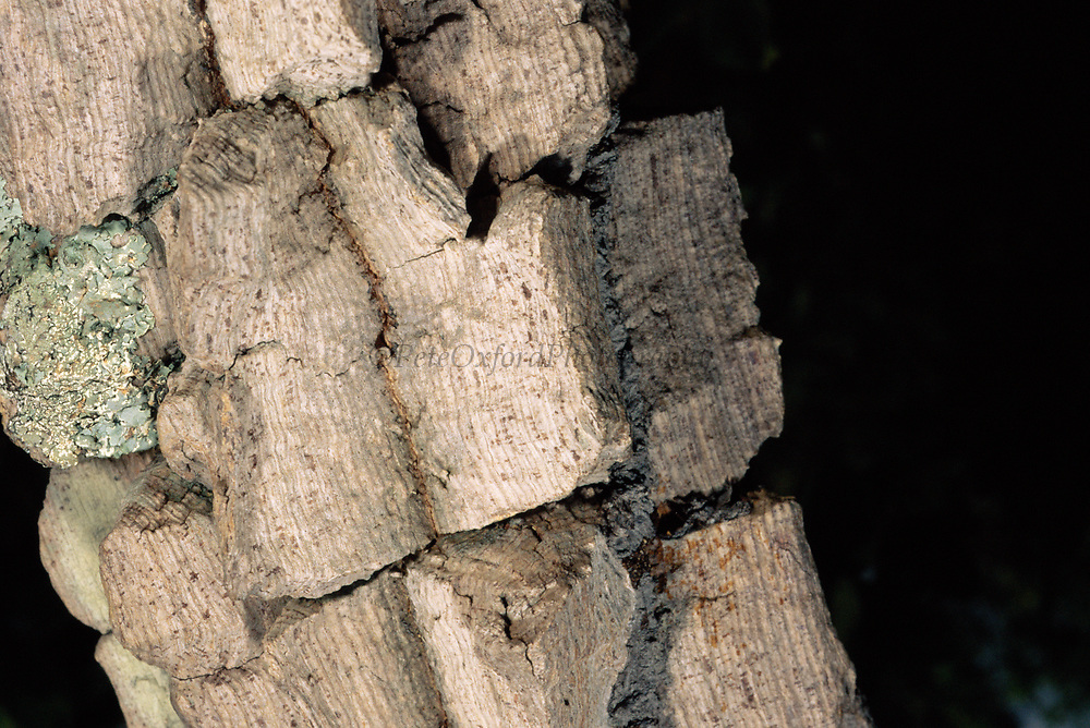 Thick Corky Tree Bark<br />