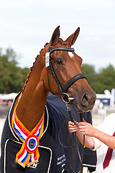 135 - Eskara de Jeu<br /> KWPN Paardendagen - Ermelo 2012<br /> © Dirk Caremans
