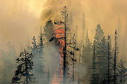 Dry forests burn near Omak as wildfires scorch central Washington August 20, 2015.<br /> <br /> Bettina Hansen / The Seattle Times