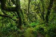 Oceania, New Zealand, Aotearoa, North Island, Taranaki, Egmont National Park, nature trail at Dawson Falls
