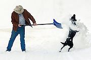 NEWS&GUIDE PHOTO / PRICE CHAMBERS.Bill Scott shovels snow from his Pine Drive home on Tuesday morning with the help of Kona, a neighbors dog who seems to enjoy face shots of the fresh powder. The 50-year resident of Jackson says he is waiting for the real winter to arrive and that it has been pretty mild so far.