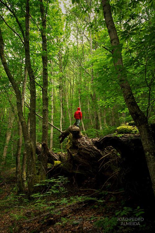 A fallen oak tree at the woods in the El Bierzo region