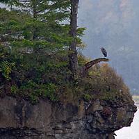 Salt Creek Heron - Enjoying the View Edited 12/17/18<br /> 1st print 13x19 12/17/18