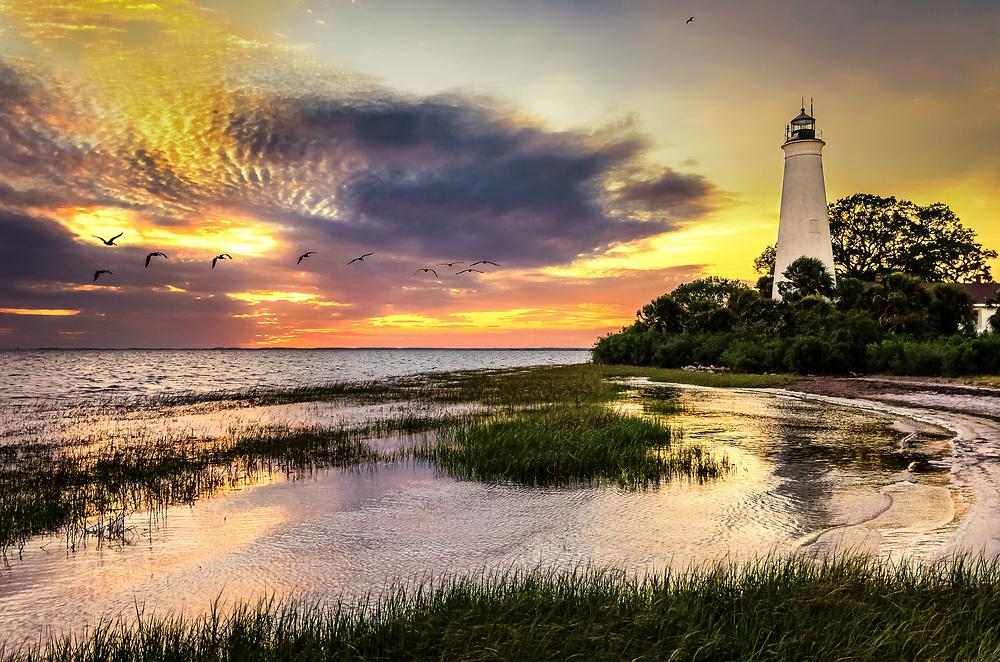 White pelican flock passing St. Marks Lighthouse. St. Marks National Wildlife Refuge, Florida.
