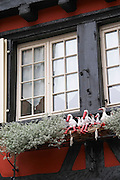 window with storks colmar alsace france