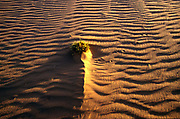 A root covered by sand in the Sahara Desert, Mauritania.