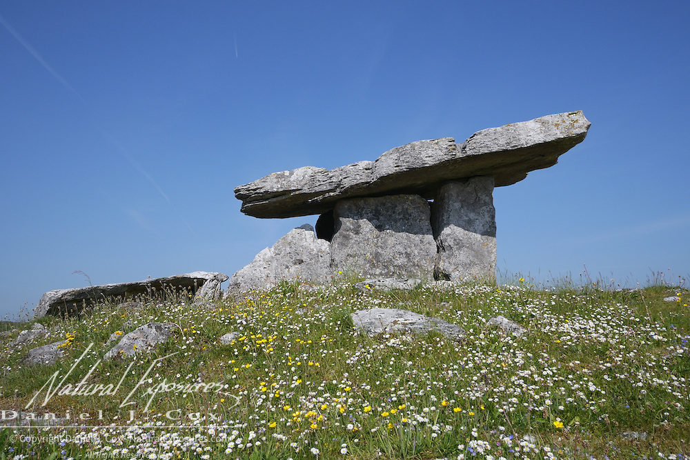 Large stone tombs, known as megalithic tombs, were built throughout Western Europe during the Neolithic or New Stone Age, when the practice of farming was first becoming established. Over ninety megalithic tombs are known to survive in the Burren; the earliest of these are the court tombs and portal tombs built in the fourth millennium BC. the portal tomb here at Poulnabrone is one of the two constructed in the Burren and is perhaps the best preserved example in all of Ireland.