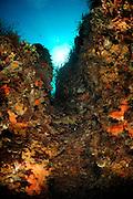 With algae and sponge covered wall. Underwater Mediterranean landscape, San Pietro Island, Italy