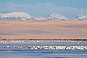 Freezeout Lake Wildlife Management Area