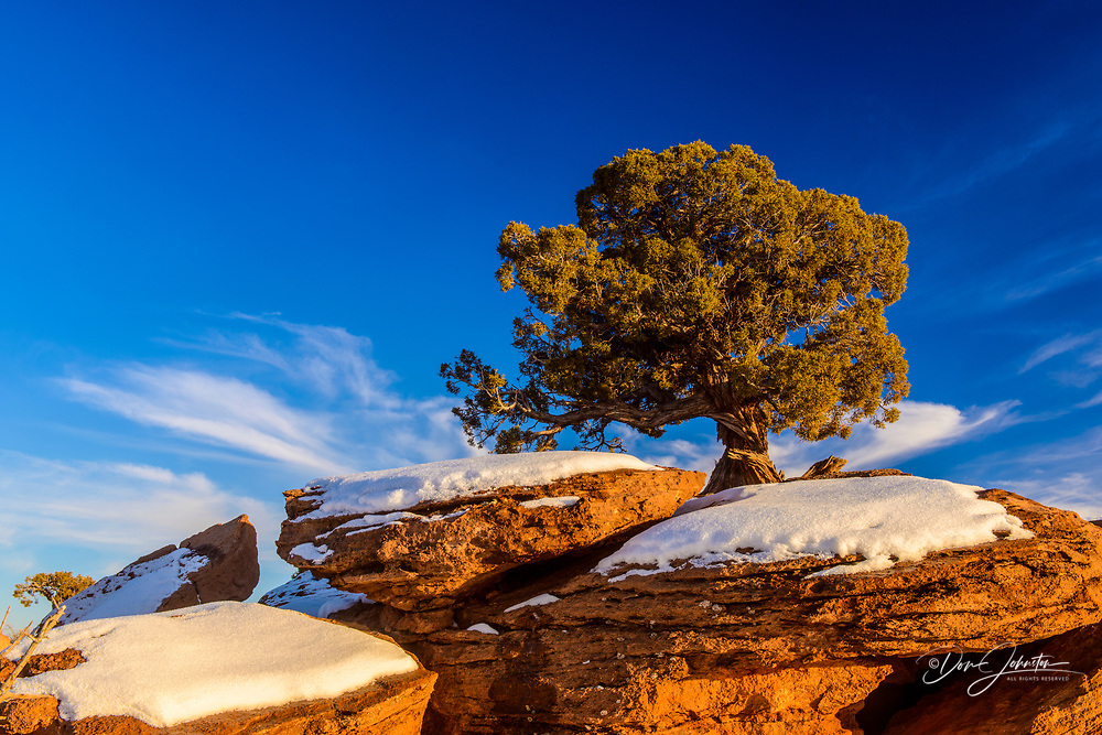 Pinyon pine and rocks in winter, Dead Horse Point State Park, Utah, USA