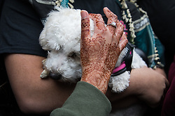 London, UK. 15th May, 2021. A woman with a henna tattoo caresses a small dog as tens of thousands of people protest outside the Israeli embassy on Nakba Day following the March for Palestine. The march, which was organised by Palestine Solidarity Campaign (PSC), CND, Friends of Al Aqsa, Muslim Association of Britain, Palestinian Forum in Britain and Stop The War Coalition, took place in protest against Israeli air raids on Gaza, the deployment of Israeli forces to the Al-Aqsa mosque during Ramadan and attempts to forcibly displace Palestinian families from the Sheikh Jarrah neighbourhood of East Jerusalem and speakers called for an end to Israeli support for and arms sales to Israel.
