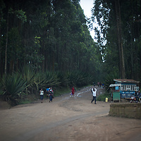 Butembo, North Kivu, is surrounded by tropical forest. Here a road emerges from forest into Butembo, North Kivu.