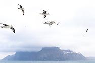 Bear Island, Bjornoya, Svalbard, Norway, Europe
