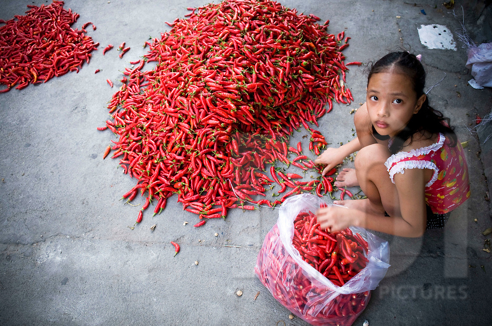 A young vietnamese girl sorts out chili peppers on a market of Nha Trang, Vietnam, Southeast Asia