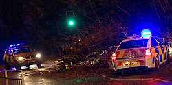 © Licensed to London News Pictures. 28/12/2011. Manchester, UK. High winds bring down a tree across Manchester's Palatine Road, during the rush hour, closing the road to traffic. Photo credit : Joel Goodman/LNP