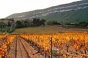 Chateau Pech-Latt. Near Ribaute. Les Corbieres. Languedoc. France. Europe. Vineyard.