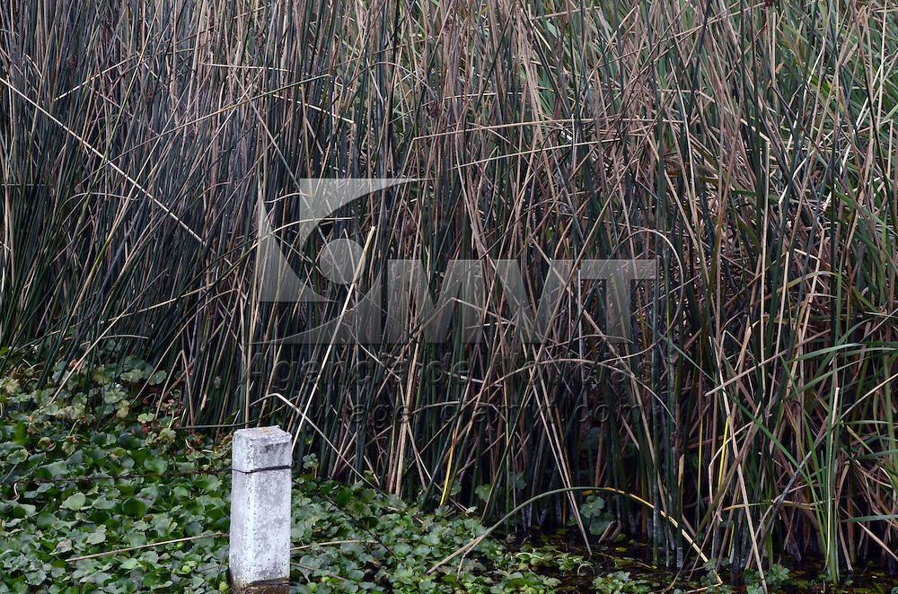 OCOYOACAC, Mexico (Noviembre 2, 2016).- Debido al crecimiento del lirio acuático y del Tule, la laguna de Cholula, está totalmente cubierta por esta maleza, y no deja ver sus aguas. Agencia MVT. José Hernández.