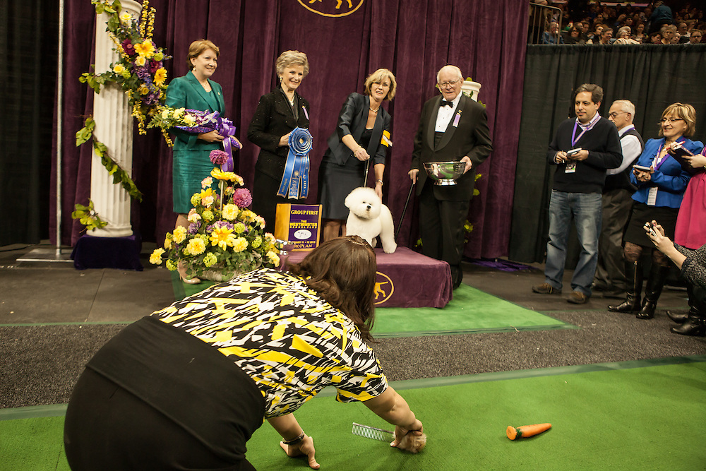 A woman tries to get the winner's attention with squeaky toys at a photo op. Bichon frise Vogelflight's Honor To Pillowtalk took top honors in the non-sporting group at the 137th annual Westminster Kennel Club Dog Show.