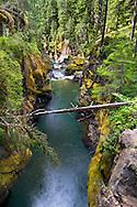 The Ohanapecosh River near Silver Falls in Mount Rainier National Park in Washington State, USA.