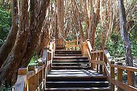 BOSQUE DE ARRAYANES (Luma apiculata) EN PENINSULA QUETRIHUE, PARQUE NACIONAL LOS ARRAYANES, VILLA LA ANGOSTURA, PROVINCIA DEL NEUQUEN, ARGENTINA (PHOTO © MARCO GUOLI - ALL RIGHTS RESERVED)
