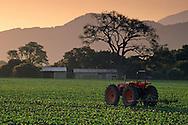 Tractor in field at sunrise, along Refugio Road, near Santa Ynez, Santa Barbara County, California