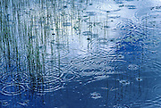 Rain drops in a small alpine lake, Snowy Range, Wyoming
