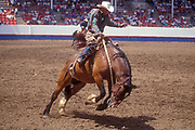 July 4, 2000, Greeley, Colorado, USA;  A cowboy struggles to stay on a bucking bronco horse at the Greeley Stampede rodeo.