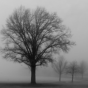 The lower common beside Lake Quannapowitt in Wakefield, MA is socked in with fog on a snowless winter morning.