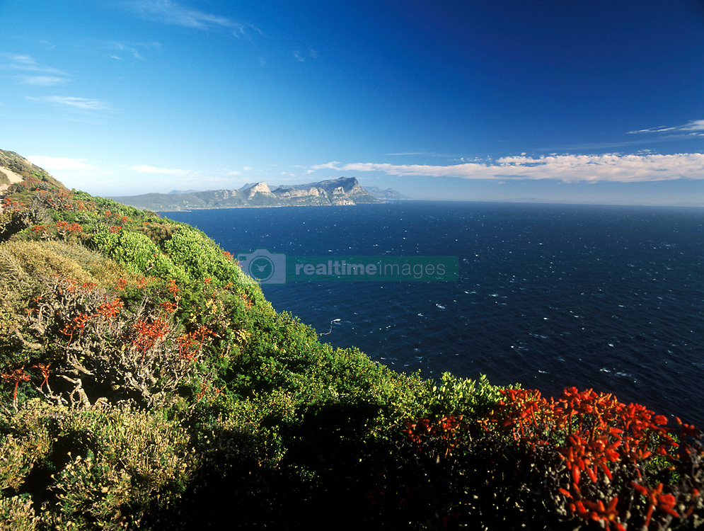 Looking over Fynbos plants, Cape Town, South Africa (Credit Image: © Axiom/ZUMApress.com)