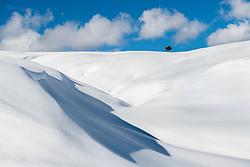 Deep Winter, lone tree. Wyoming