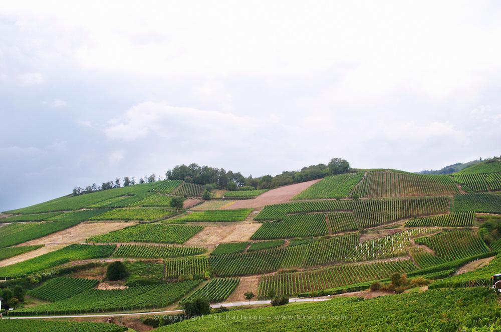 vineyard brand gc turckheim alsace france