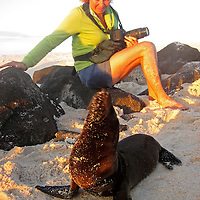 South America, Ecuador, Galapagos Islands. Galapagos Sea Lion poses for female photographer.