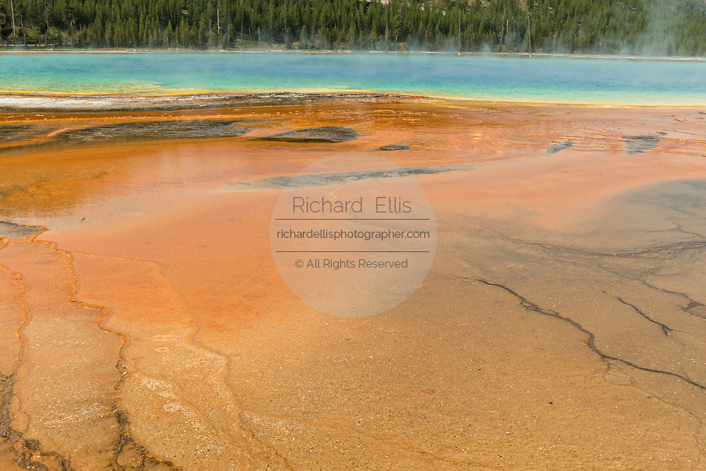 Colorful cyanobacteria mats surround the Grand Prismatic Spring, the largest hot spring in Yellowstone National Park and third largest in the world. Grand Prismatic is about 250 by 300 feet in size, averages 160 degrees Fahrenheit and is up to 160 feet deep. The bright colors around the spring are from microorganisms growing in the hot water runoff. The Grand Prismatic Spring is part of the Midway Geyser Basin Excelsior Group in Yellowstone, Wyoming.