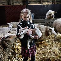 Nederland, Zunderdorp , 3 maart 2014<br /> Julia (7) houdt 1 van de eerste nieuw geboren lammetjes vast op boerderdij de Stadshoeve.<br /> De schapen er varkens kijken toe.<br /> Foto:Jean-Pierre Jans
