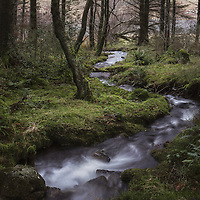 Some wet Welsh woodland