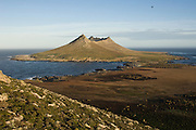 Steeple Jason Island. View looking east to west. FALKLAND ISLANDS.<br /> The Jasons (Grand and Steeple) are a chain of islands 40 miles (64km) north and west off West Falkland towards Patagonia. Steeple is 6 by 1 mile (10Km by 1.6km) in size. From the coast the land rises steeply to a rocky ridge running along the length. <br /> This island has the largest Black-browed Albatross colony in the world with 113,000. The island is owned by WCS (Wildlife Conservation Society)