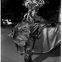 Costumed dancer, wearing black with black feathers, prepares for the Halloween Parade in Greenwich Village, NYC