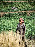 Women in the fields of Swanta village.